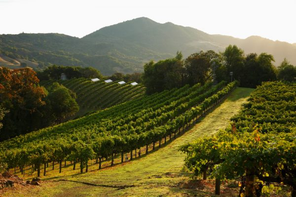 07434 vineyards 600x400 4 Bay Area Celebrities And Their Real Estate Deals in 2016