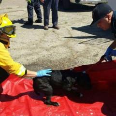 0b0ae dog 240x240 Broker accused of bilking neighbors
