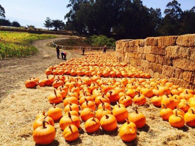 ba7ba 20150924  HALFMOON 1004 011 24 Bay Area Halloween pumpkin patches (and corn mazes)! for 2018